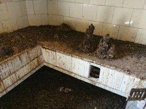 servicio eliminacion palomas