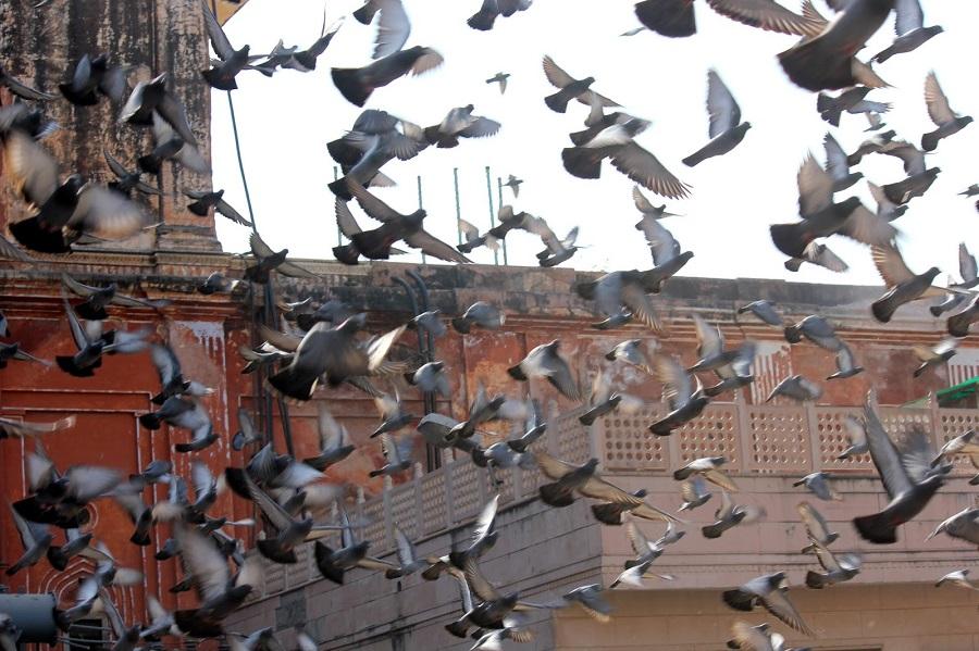 eliminacion-plaga-palomas-barcelona